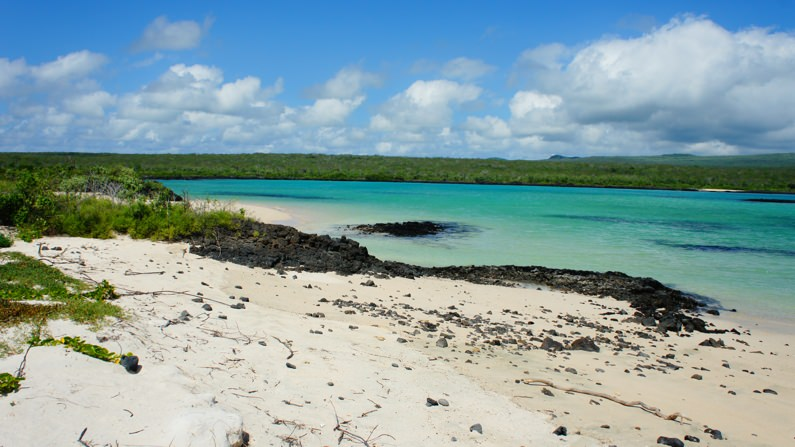 NGO Taxi Volunteering in Charles Darwin's footsteps Galapagos Islands