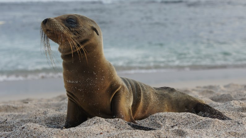 Environmental Conservation and Protection in the Galapagos (Ecuador)