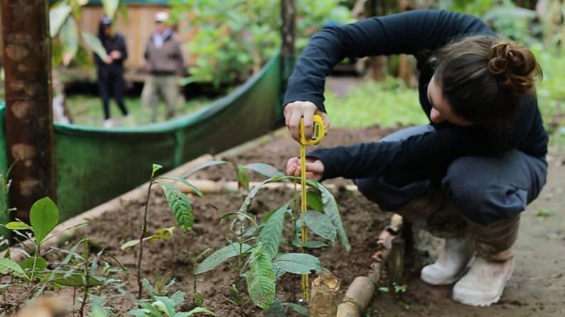 NGO Taxi reforestation program Amazon jungle
