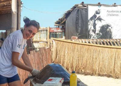 ngotaxi volunteering ecuador surfcamp-6