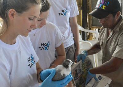 ngotaxi volunteering ecuador surfcamp-8