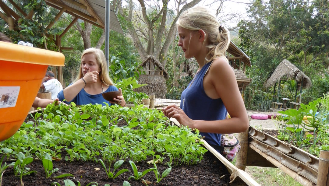 Go Volunteering and Get to Grips with Sustainable Farming Techniques (Ecuador)